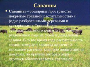 Саванны Саванны – обширные пространства покрытые травяной растительностью с р