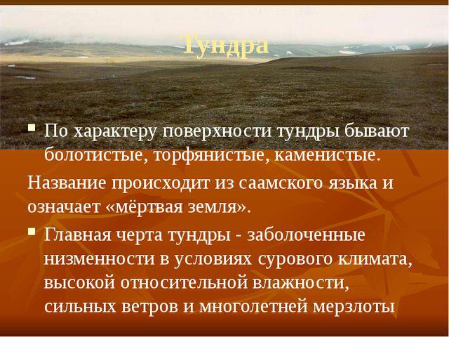 Тундра По характеру поверхности тундры бывают болотистые, торфянистые, камени...