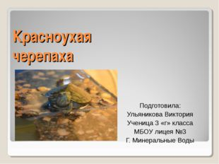 Красноухая черепаха Подготовила: Ульяникова Виктория Ученица 3 «г» класса МБО