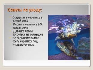 Советы по уходу: Содержите черепаху в чистой воде Кормите черепаху 2-3 раза в