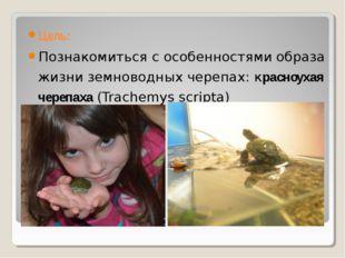 Цель: Познакомиться с особенностями образа жизни земноводных черепах: красноу