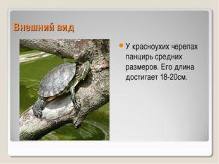 Внешний вид У красноухих черепах панцирь средних размеров. Его длина достигае