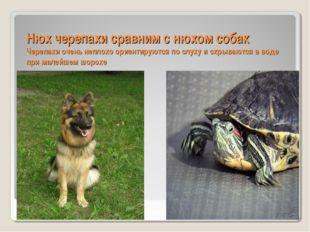 Нюх черепахи сравним с нюхом собак Черепахи очень неплохо ориентируются по сл