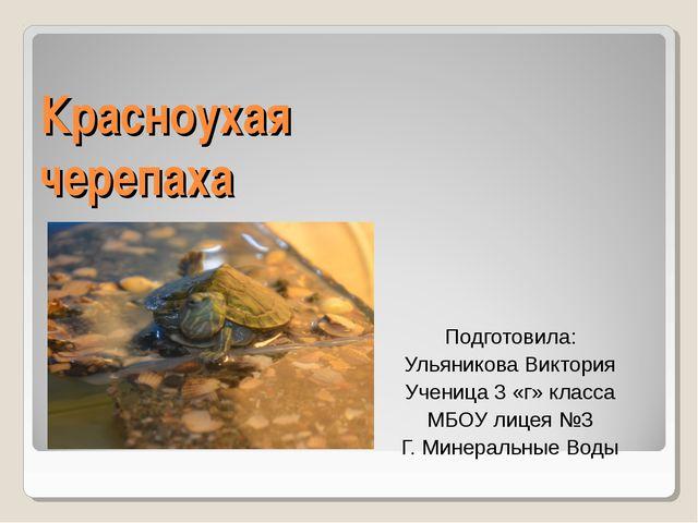 Красноухая черепаха Подготовила: Ульяникова Виктория Ученица 3 «г» класса МБО...