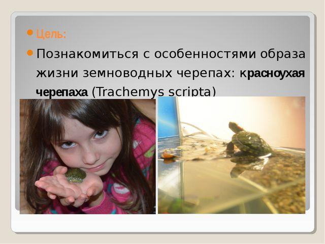 Цель: Познакомиться с особенностями образа жизни земноводных черепах: красноу...
