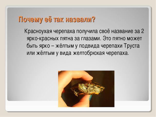Почему её так назвали? Красноухая черепаха получила своё название за 2 ярко-...