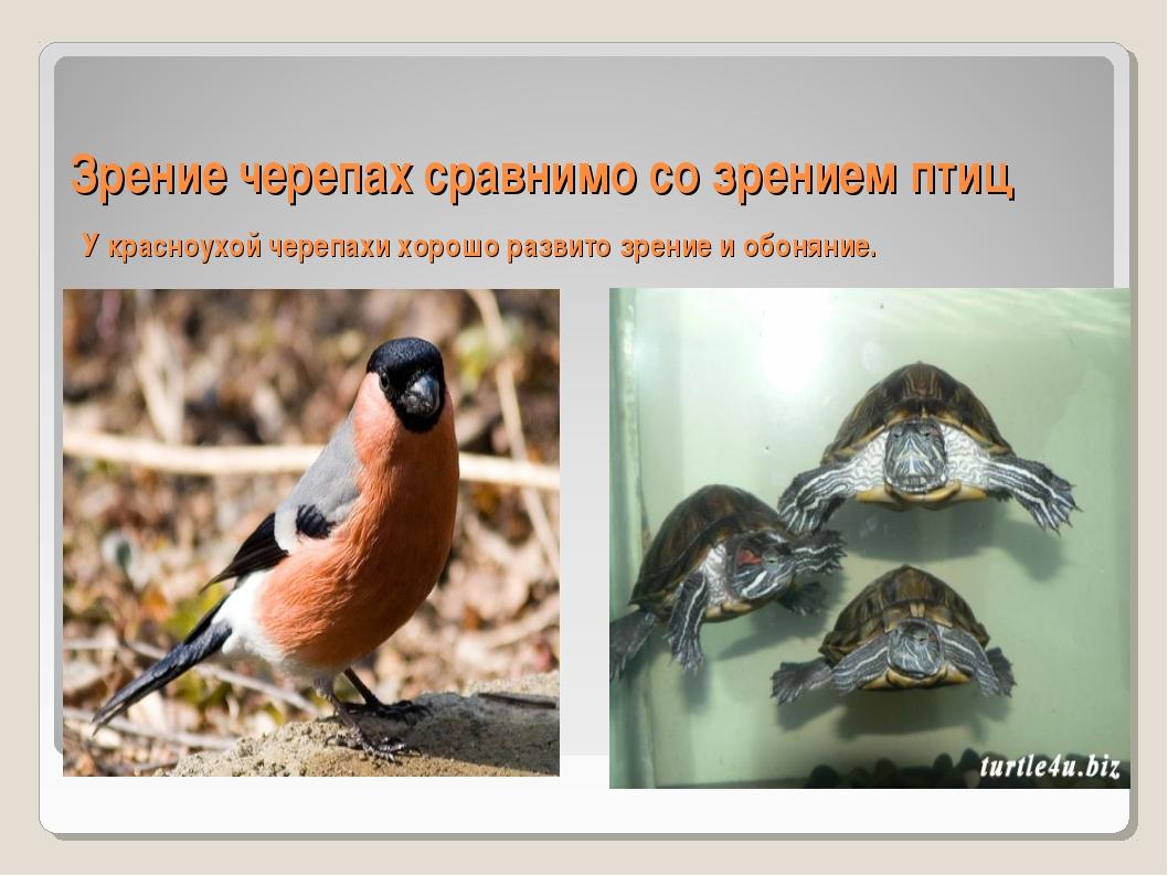 Зрение черепах сравнимо со зрением птиц У красноухой черепахи хорошо развито...