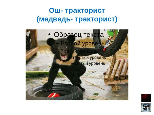 Ош- тракторист (медведь- тракторист)