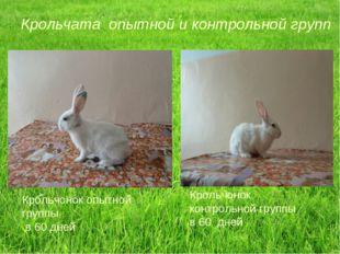 Крольчата опытной и контрольной групп Крольчонок опытной группы в 60 дней Кро