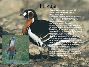 Птицы Птицы являются самой многочисленной как в видовом так и количественном