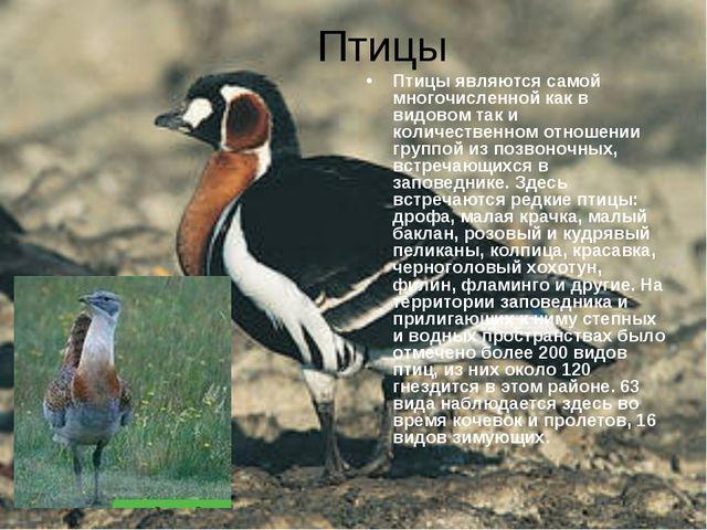 Птицы Птицы являются самой многочисленной как в видовом так и количественном...
