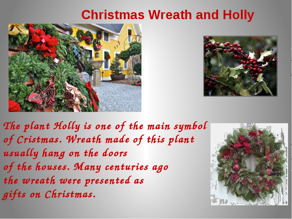 Christmas Wreath and Holly The plant Holly is one of the main symbol of Crist...