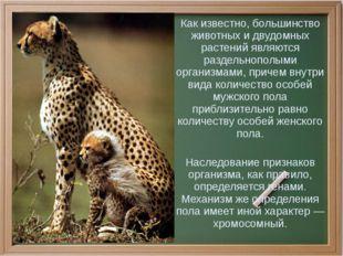 Как известно, большинство животных и двудомных растений являются раздельнопо