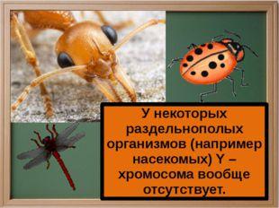 У некоторых раздельнополых организмов (например насекомых) Y – хромосома воо