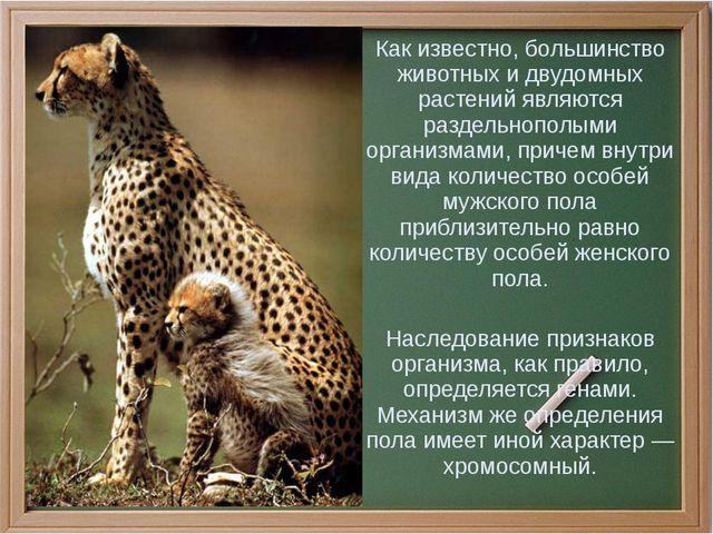Как известно, большинство животных и двудомных растений являются раздельнопо...