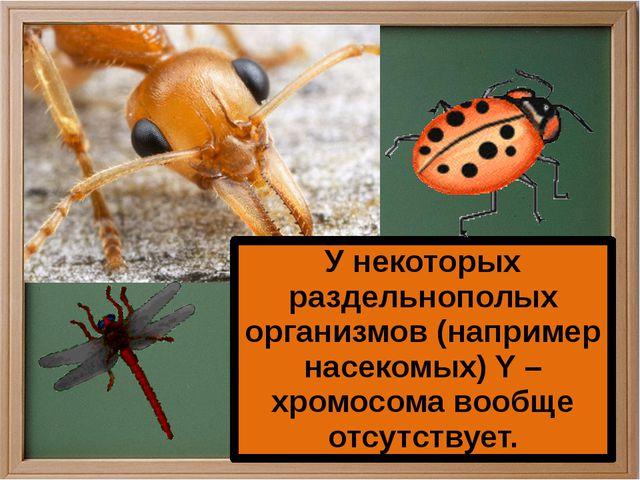 У некоторых раздельнополых организмов (например насекомых) Y – хромосома воо...