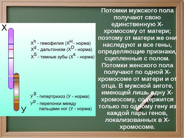 Потомки мужского пола получают свою единственную Х-хромосому от матери; поэт...