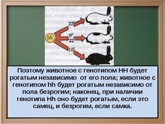Поэтому животное с генотипом HH будет рогатым независимо от его пола; животн...