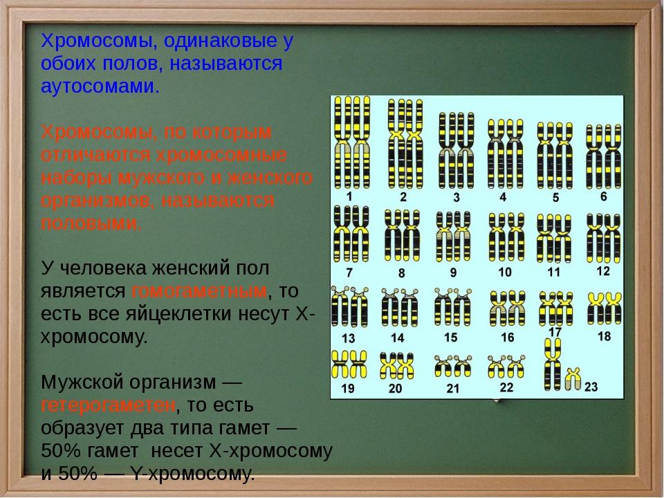 Хромосомы, одинаковые у обоих полов, называются аутосомами. Хромосомы, по ко...