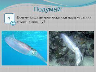 Подумай: ? Почему хищные моллюски кальмары утратили домик- раковину?