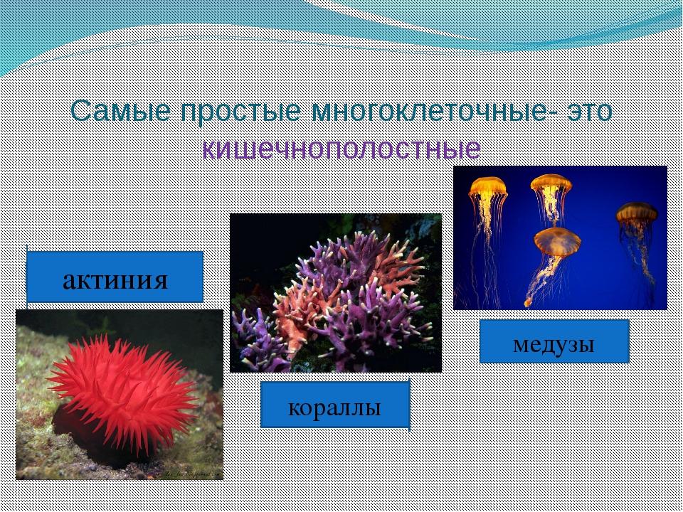 Самые простые многоклеточные- это кишечнополостные кораллы актиния медузы