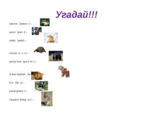 Угадай!!! hamster [hæmstə] – parrot [pærət] – rabbit [ræbit] – tortoise [tɔ:t