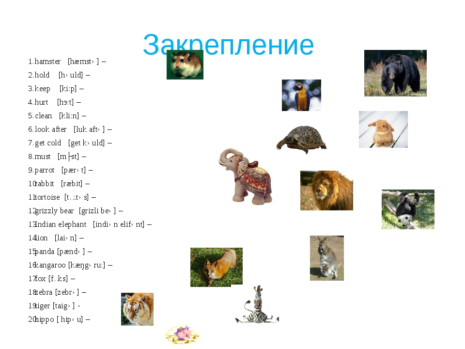 Закрепление hamster [hæmstə] – hold [həuld] – keep [ki:p] – hurt [hз:t] – cle...