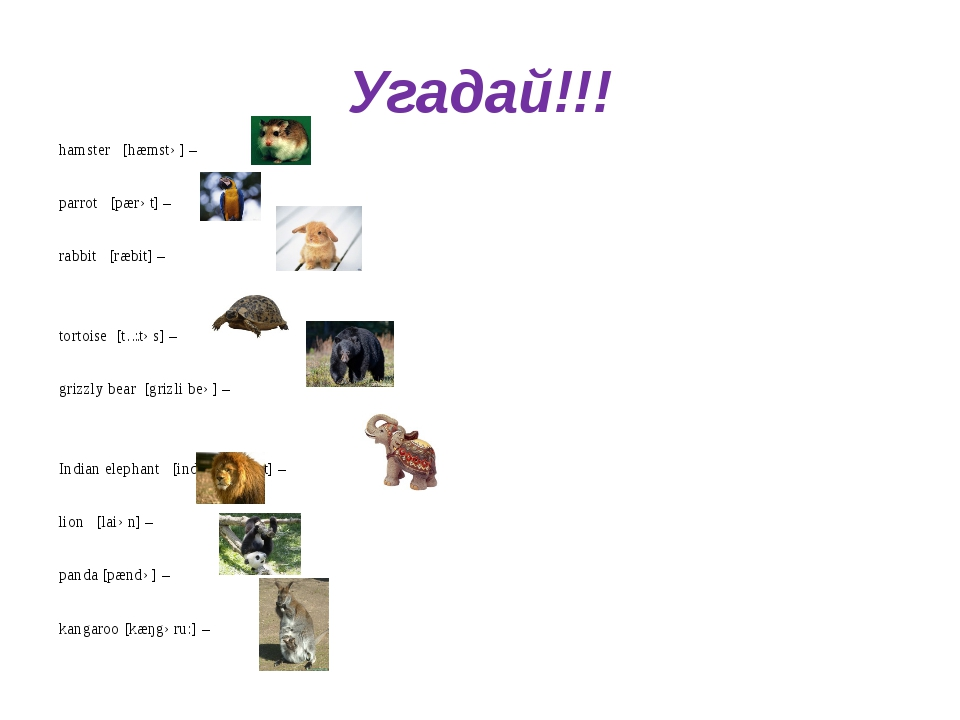 Угадай!!! hamster [hæmstə] – parrot [pærət] – rabbit [ræbit] – tortoise [tɔ:t...