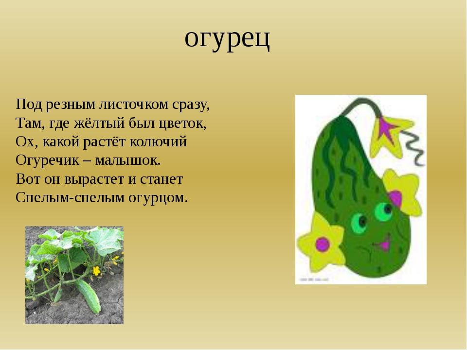 огурец Под резным листочком сразу, Там, где жёлтый был цветок, Ох, какой рас...