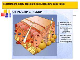 Рассмотрите схему строения кожи. Назовите слои кожи.