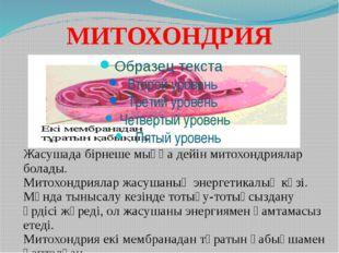 МИТОХОНДРИЯ Жасушада бірнеше мыңға дейін митохондриялар болады. Митохондрияла