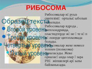РИБОСОМА Рибосомалар нәруыз синтезінің орталығыболып табылады. Рибосомалар яд