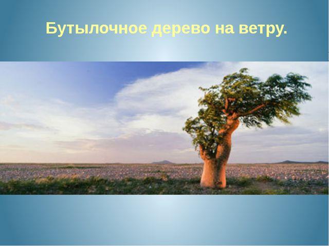 Бутылочное дерево на ветру.