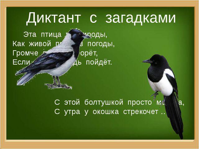 Диктант с загадками Эта птица у природы, Как живой прогноз погоды, Громче все...
