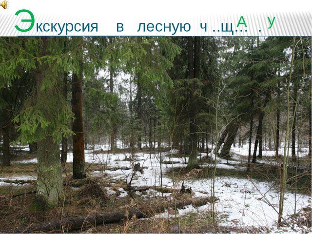 Экскурсия в лесную ч ..щ… . у А