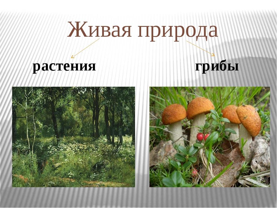 Живая природа растения грибы