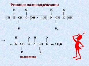Реакция поликонденсации H O H O | ║ | ║ …H – N – CH – C – OH + …H – N – CH –