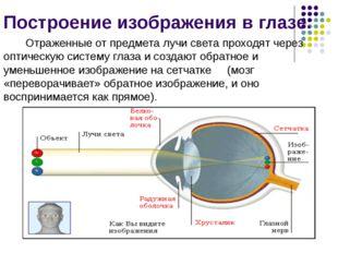 Построение изображения в глазе. Отраженные от предмета лучи света проходят че