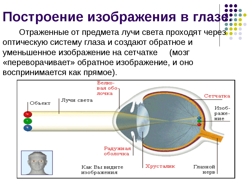 Построение изображения в глазе. Отраженные от предмета лучи света проходят че...