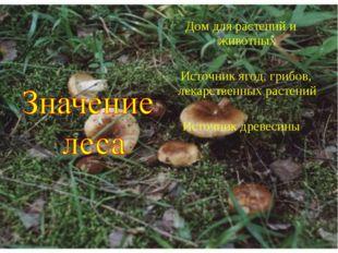 Дом для растений и животных Источник ягод, грибов, лекарственных растений Ист