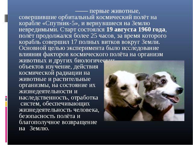 Бе́лка и Стре́лка —— первые животные, совершившие орбитальный космический по...