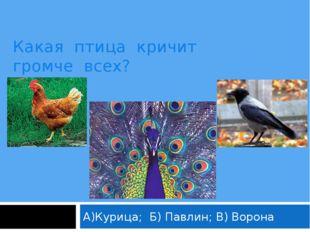 Какая птица кричит громче всех? А)Курица; Б) Павлин; В) Ворона