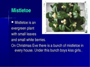 Mistletoe Mistletoe is an evergreen plant with small leaves and small white b