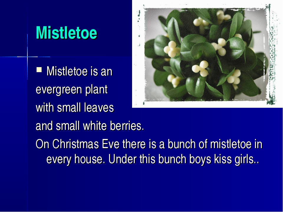 Mistletoe Mistletoe is an evergreen plant with small leaves and small white b...