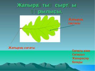 Жапырақтың сыртқы құрылысы. Жапырақ тақтасы Жапырақ сағағы Сағақты және Сағақ