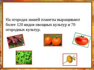 На огородах нашей планеты выращивают более 120 видов овощных культур и 70 ог