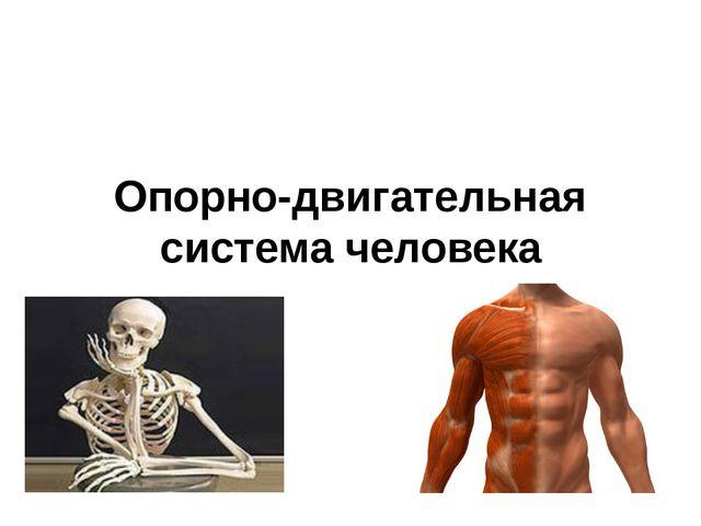 Опорно-двигательная система человека