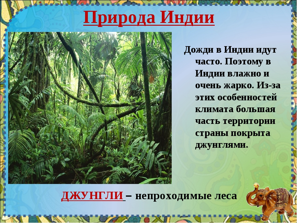 Природа Индии ДЖУНГЛИ – непроходимые леса Дожди в Индии идут часто. Поэтому в...