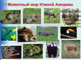 Животный мир Южной Америки