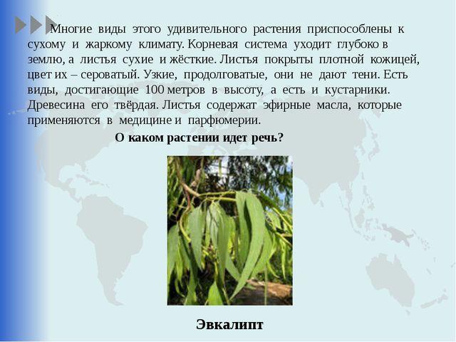 Многие виды этого удивительного растения приспособлены к сухому и жаркому кл...